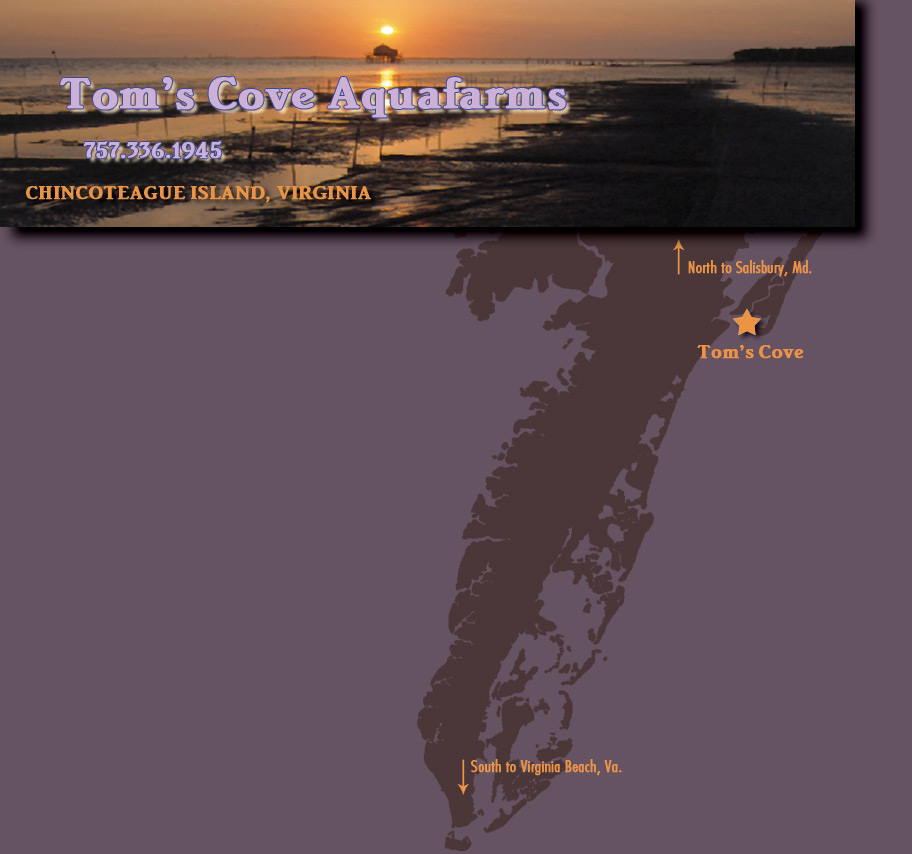 Image of Sunset and Map of the Eastern Shore VA